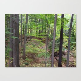 DEEP WOODS AUTUMN (Whiting Road Nature Preserve, Webster, NY) Canvas Print