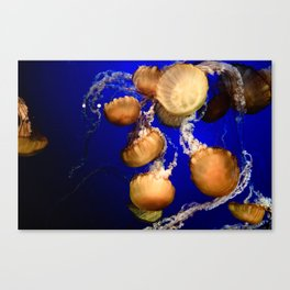 Sea Nettle Group Canvas Print