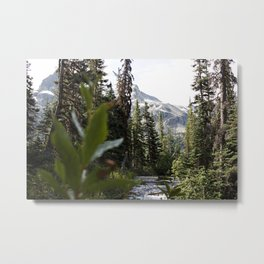 Into the Wild while in Whistler Canada Metal Print