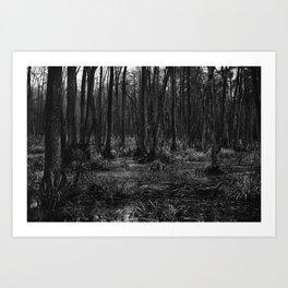 Kampinoski National Park Art Print