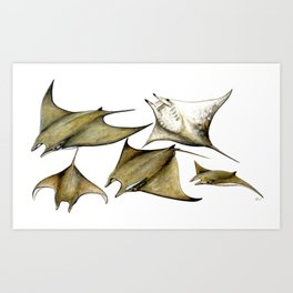 Chilean devil manta ray (Mobula tarapacana) Art Print