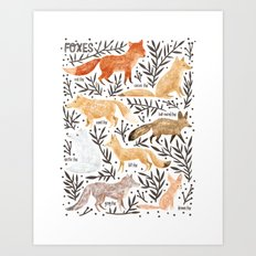 Foxes Field Guide Art Print