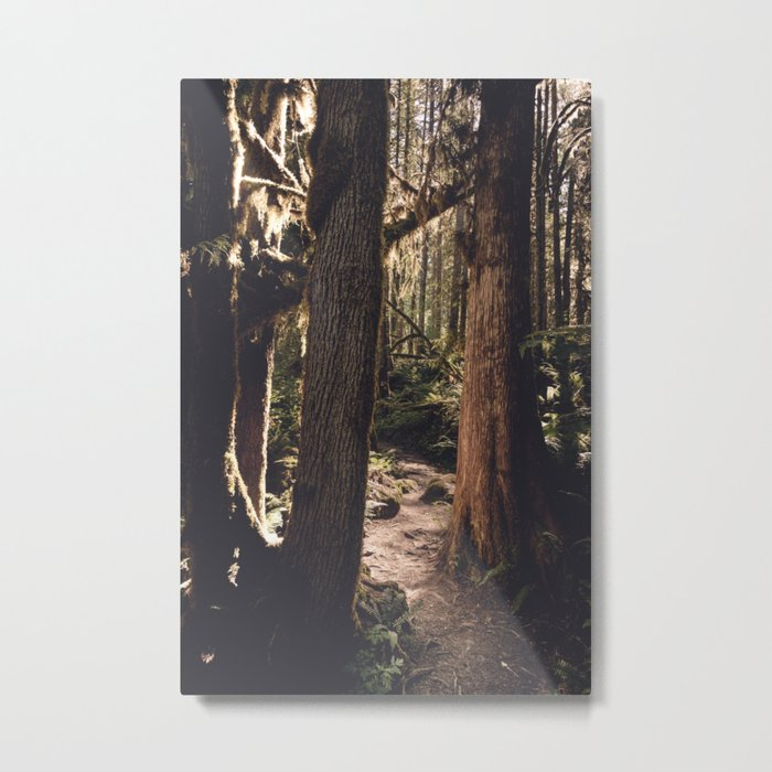 Forest Wonderland Metal Print