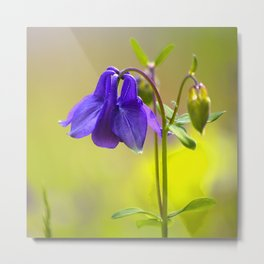 Purple Columbine In Spring Mood #decor #society6 #buyart Metal Print