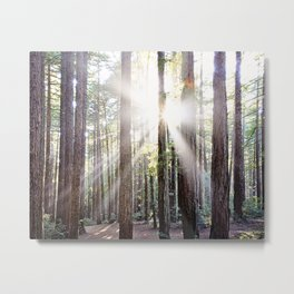 Sunburst Through the Redwoods Metal Print