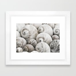 Shark's Eye Seashell Collection Framed Art Print