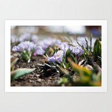 Spring Light Art Print
