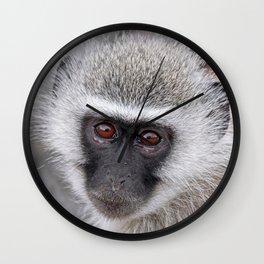 Little vervet monkey, Africa wildlife Wall Clock