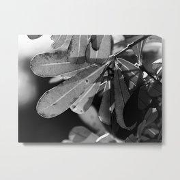 Leafy Afternoon II Metal Print