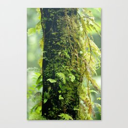 Humid Jungle Tree Canvas Print