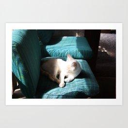 Cat In The Sun Art Print