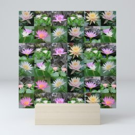 collage of asian lotus flowers, water lilies, elegant, beautiful Mini Art Print