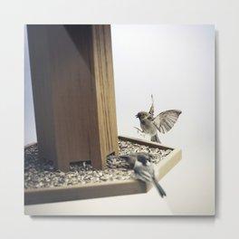 Tom Feiler Sparrows Metal Print