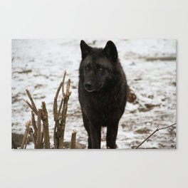 Wolves II  Canvas Print