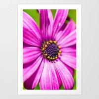 Macro flowers of Madeira Art Print