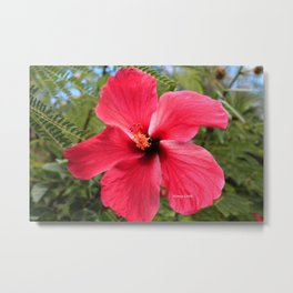 Pink Hawaii Metal Print