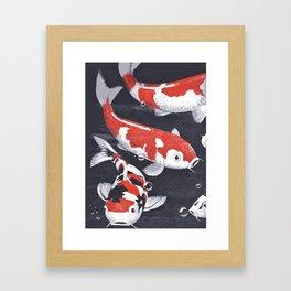 Koi carp, orange, white and black ornamental fish swimming gracefully Framed Art Print