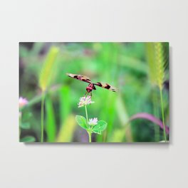 Dragonfly I Metal Print
