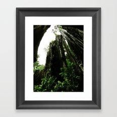 Redwoods #4 Framed Art Print