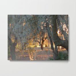 Morning Light 2 Metal Print