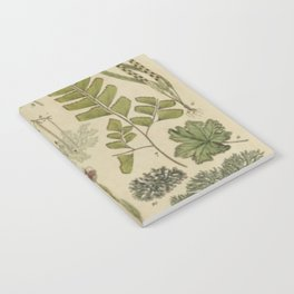 Ferns And Mosses Notebook