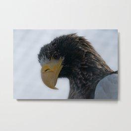 Steller's Sea Eagle Metal Print