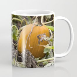Pie Pumpkins in a Field Coffee Mug
