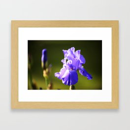 Iris in purple Framed Art Print