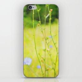 Cornflowers iPhone Skin