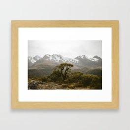 Alpine Tree Framed Art Print