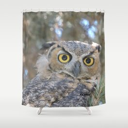Young Owl at Noon Shower Curtain