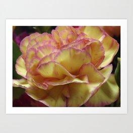 Blushing Carnation  Art Print