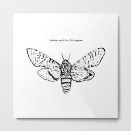 Anherontia Antropos / Hawk Moth Metal Print