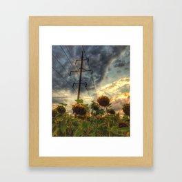 field of faded sunflowers  Framed Art Print