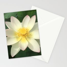 Lotus White Stationery Cards