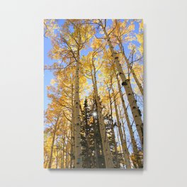 Autumn Aspen Metal Print