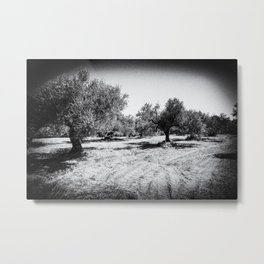 Old Olive Trees on Crete, Greece  | Black & White | Landscape Photography | Travel Photography | Fine Art Photo Print Metal Print