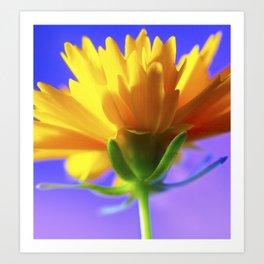 yellow zinnia Art Print