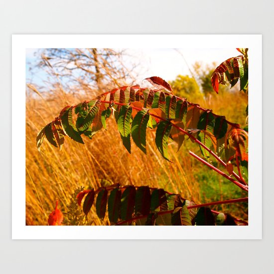 Another Autumn Art Print