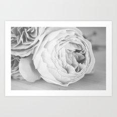 Early Roses - Black & White Art Print