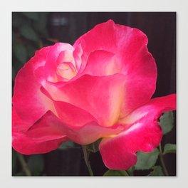 Grandma's Beautiful Rose Untouched Canvas Print