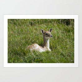 Fallow deer fawn Art Print