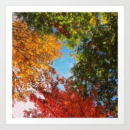 Colorburst Fall Art Print