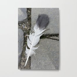 feather on pavement Metal Print