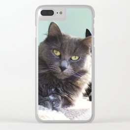 Lovers. Cats. Clear iPhone Case