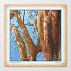 MADRONA TREE BY THE SEA Canvas Print
