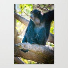 Gibbon 4 - Singing Canvas Print