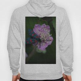 New forest burnet on purple flower Hoody