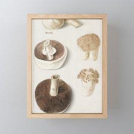 Common meadow mushroom, Agaricus campestris (1596–1610) by Anselmus Boëtius de Boodt. Framed Mini Art Print