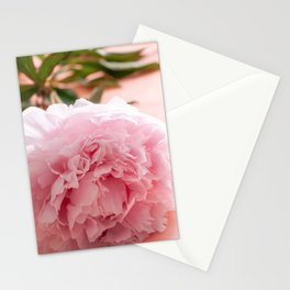 Pink I Coral art print I Rose flower in The Netherlands I Photograpy print pink Stationery Cards